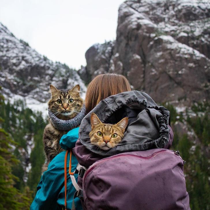 Фото №6 - Замурчательные компаньоны: коты-путешественники