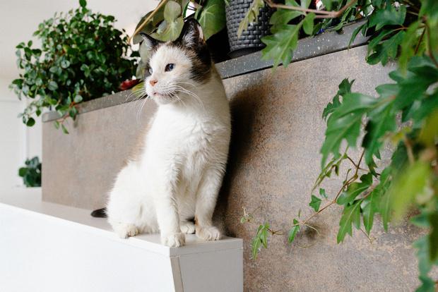 Фото №3 - Эти котики и песики ищут хозяев!