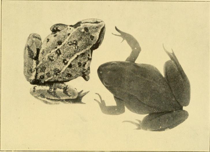Фото №8 - Лягушачья икра, коктейль Гиппократа и бусы: как определяли беременность в разные века