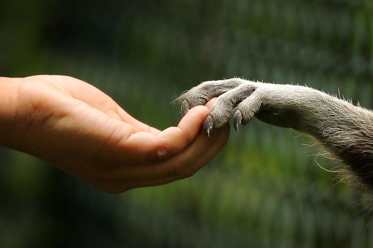 Фото №2 - Гений адаптации: как еноты захватили мир