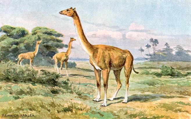 Фото №1 - Корабли пустыни: 7 поразительных фактов о верблюдах