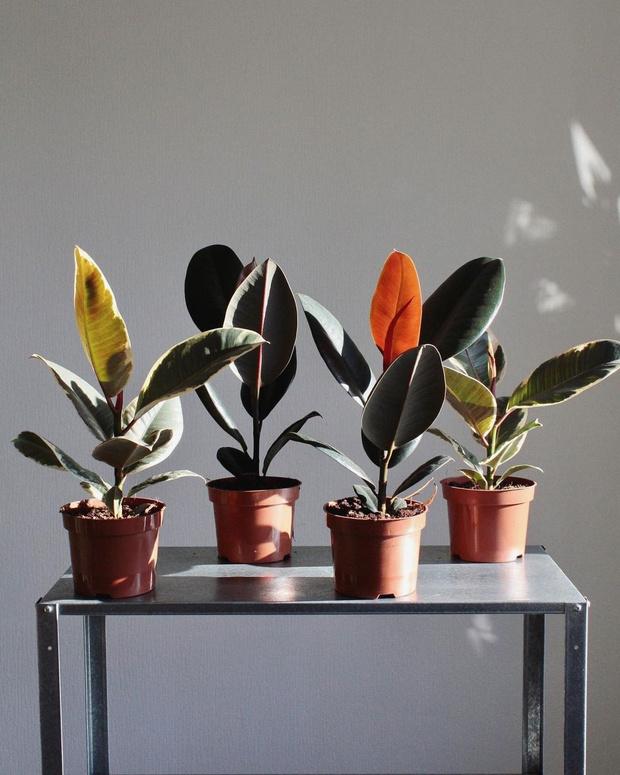 Фото №4 - С чего начать озеленение квартиры: советы эксперта