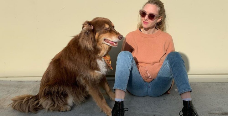 Фото №9 - Какие породы собак выбирают знаменитости? 🐶
