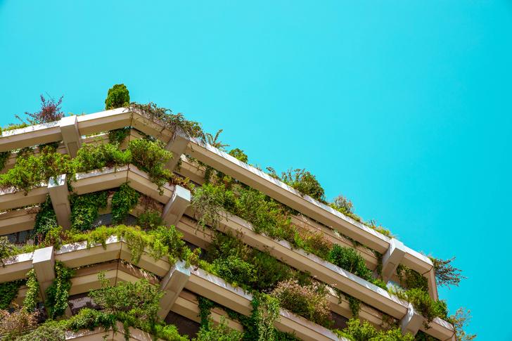 Фото №1 - Органическая архитектура