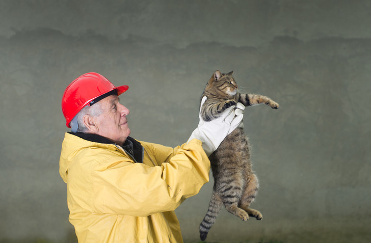 Фото №1 - Как кошки предсказывают землетрясения?