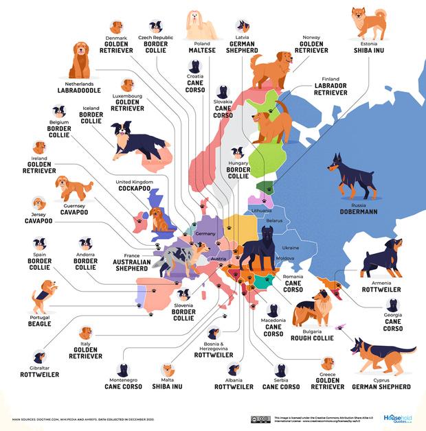 Фото №2 - Карта: Самые популярные породы собак в каждой стране мира