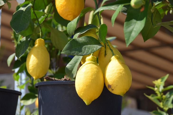 Фото №5 - Зеленый оазис на балконе: 5 растений, которые помогут перенести жару