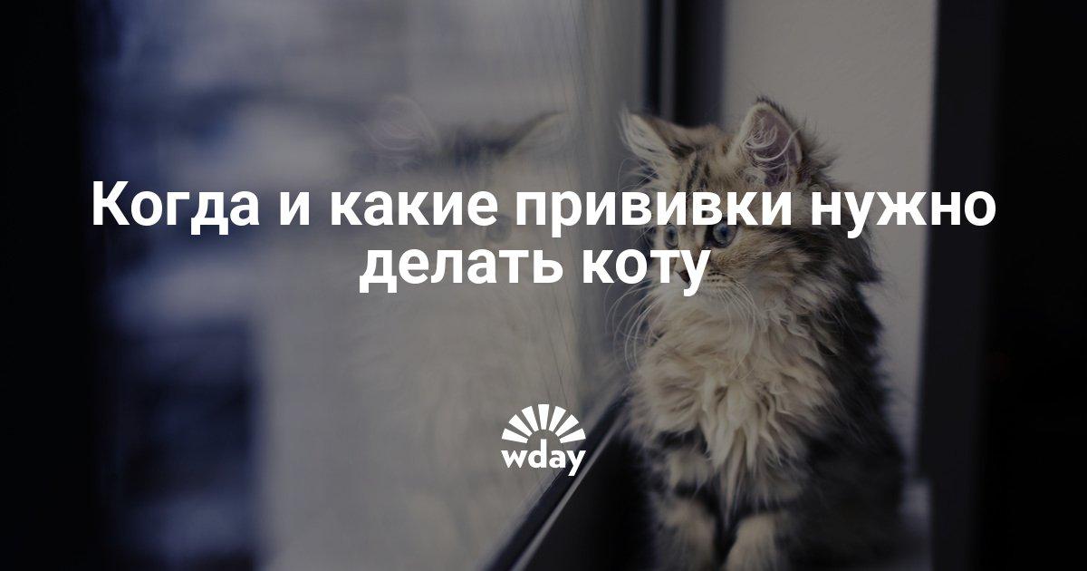 когда делать прививку коту