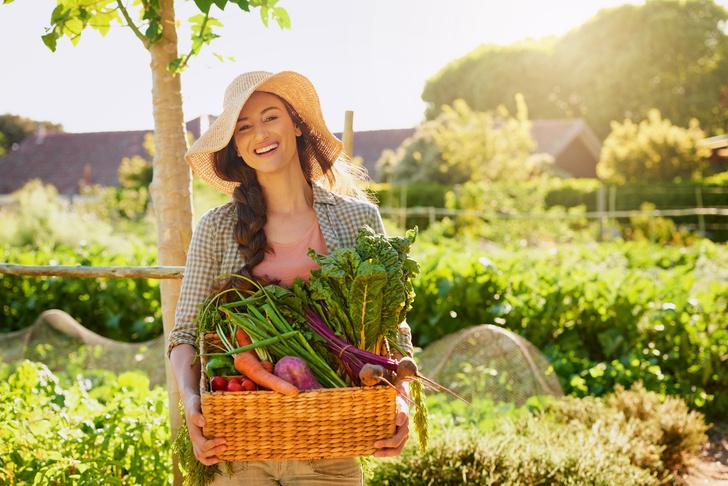 как быстро и дешево повысить плодородность почвы