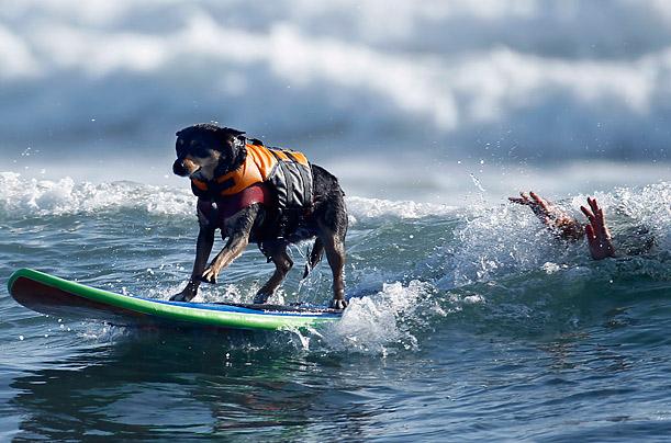 Фото №1 - Отпуск на море: как это делают собаки