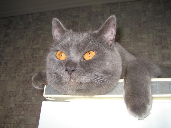 101 кличка для котов и кошек