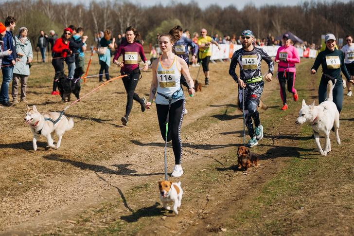 Фото №2 - Пушистый забег: собаки посоревнуются в скорости