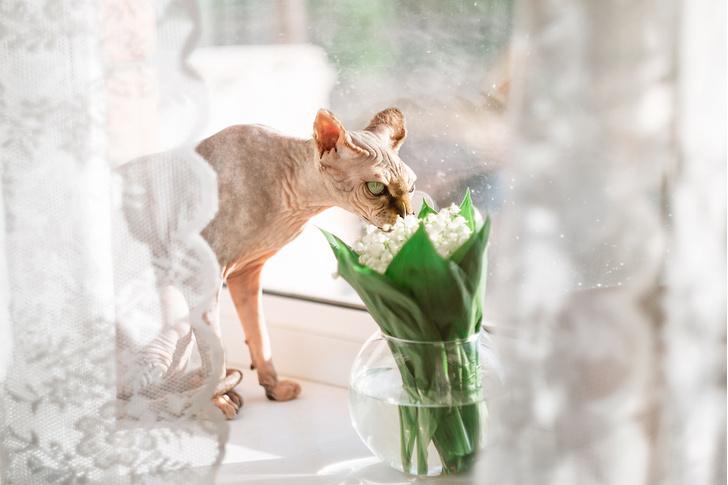 Фото №10 - 9 популярных цветов, которые смертельно опасны для котов