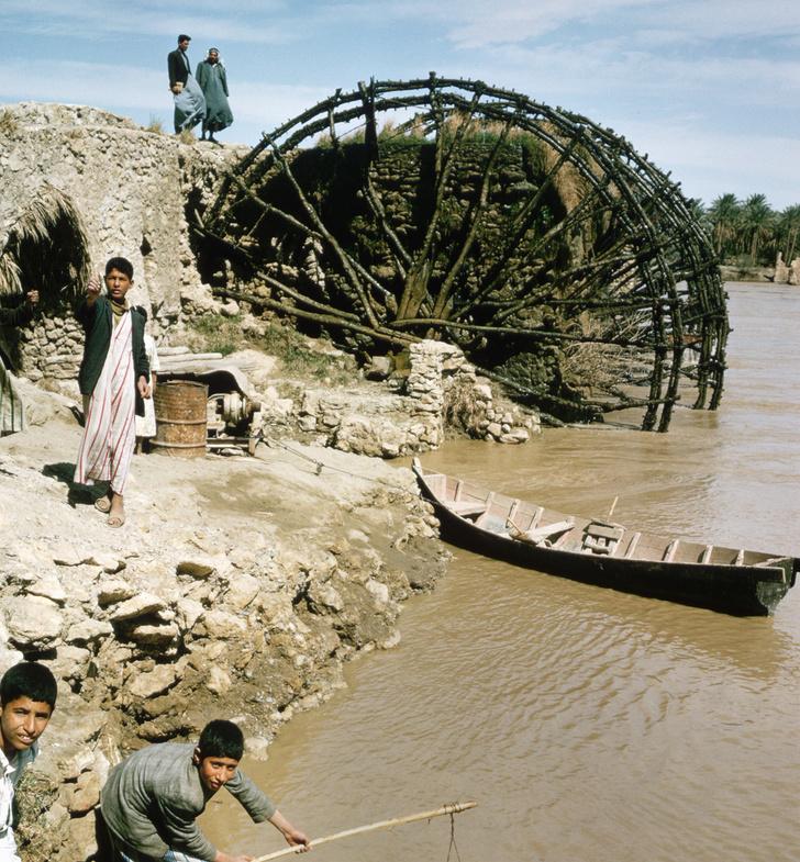 Фото №10 - Пути прогресса: как человек изобрел колесо
