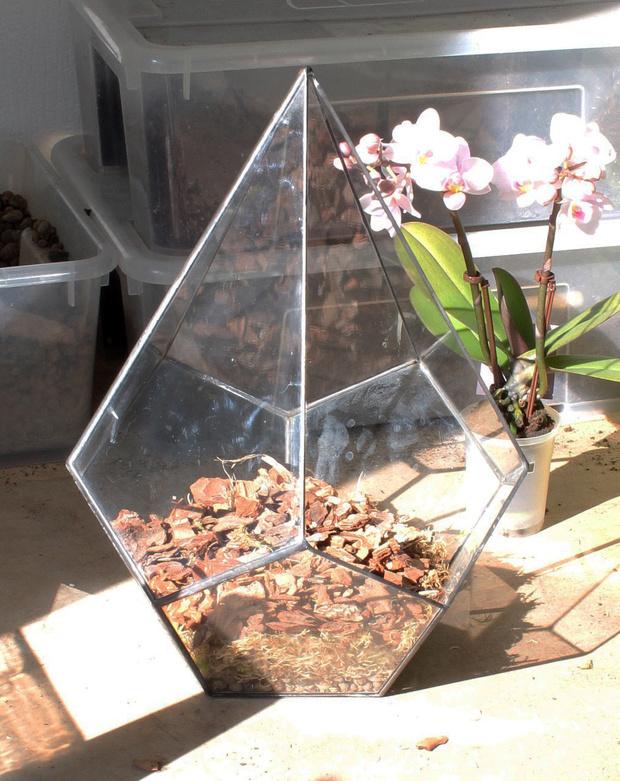 Фото №6 - Весенний флорариум с орхидеей: советы по изготовлению и уходу
