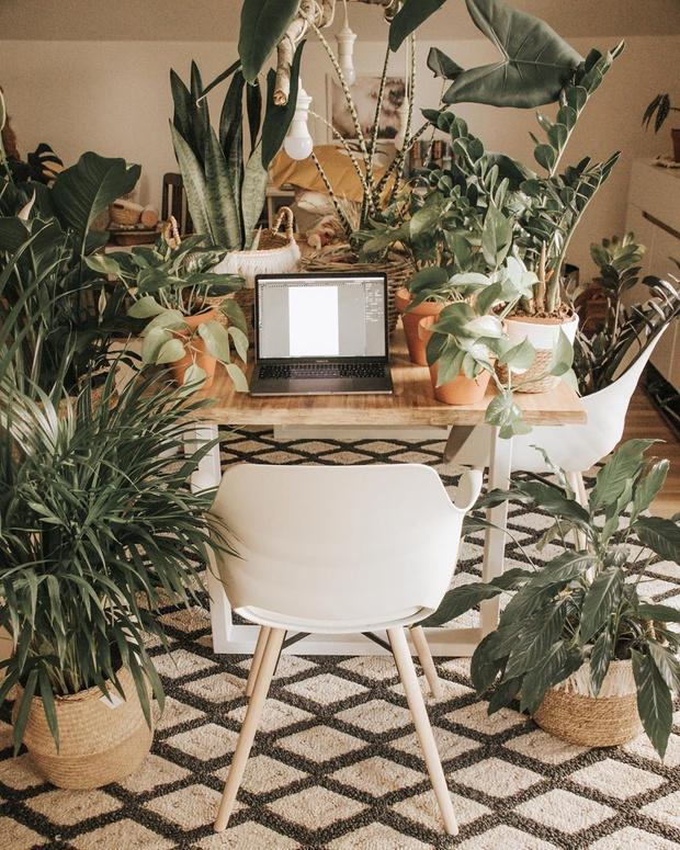 Фото №6 - Растения в интерьере: 6 идей для создания мини-сада