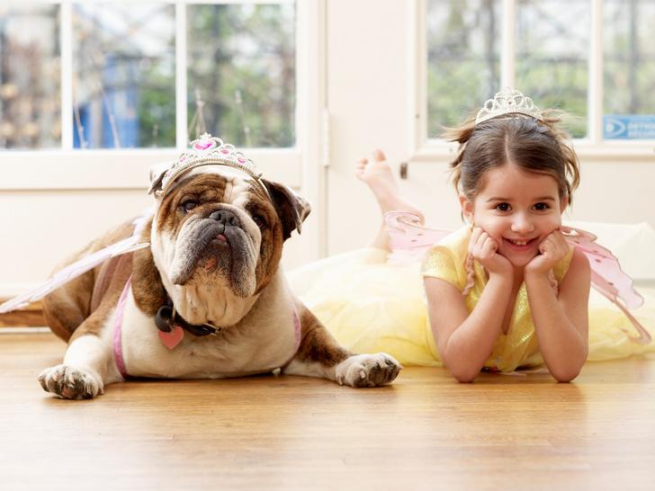 породы собак для квартиры, собаки для квартиры, тихие породы собак, породы собак для детей