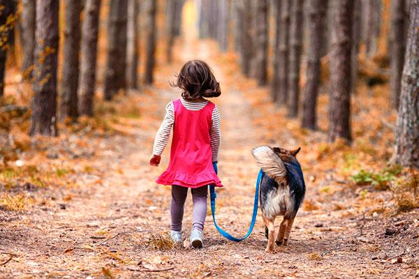 Фото №2 - Ребенок хочет собаку: 5 актуальных вопросов