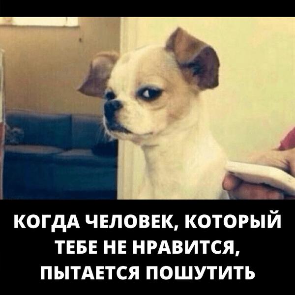 Фото №13 - Милота и угар: 20 дико ржачных мемов про животных