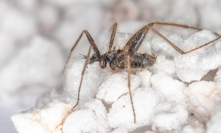 Фото №1 - Драмы, инженерные изобретения, смертельные опасности: как проходит весна в мире насекомых и пауков
