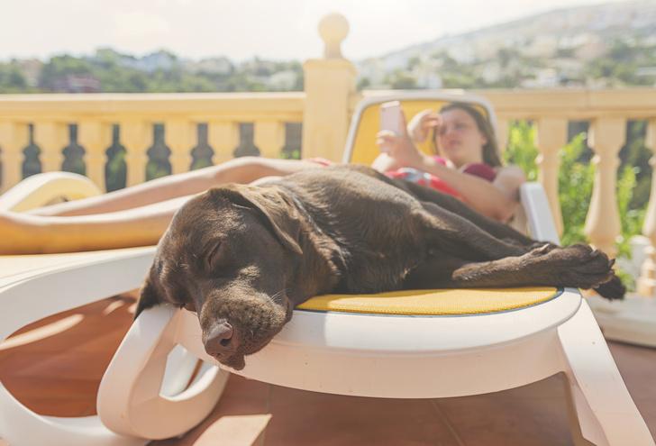 Фото №1 - Почему в жару так хочется спать и все лень? 🥱