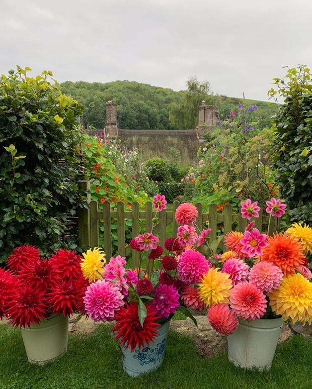 Фото №1 - Лучшие цветы для осеннего букета