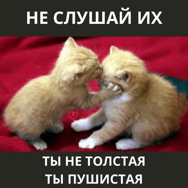 Фото №8 - Милота и угар: 20 дико ржачных мемов про животных