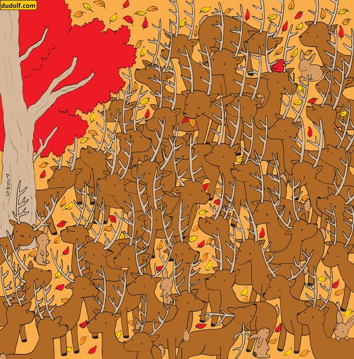Фото №1 - Загадка для глаз: отыщи олениху среди оленей