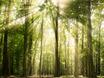 Прогулки на природе — профилактика депрессии