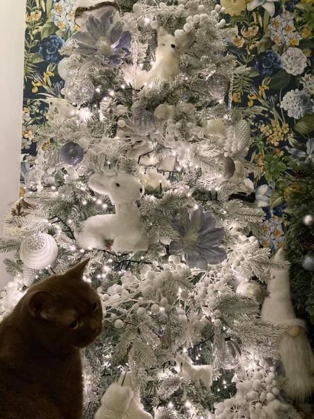 Фото №3 - Тест на внимательность: а вы сумеете найти кошку на фото?