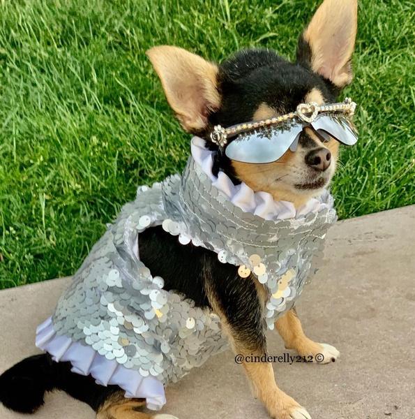 Фото №11 - Как мы все будем встречать Новый год 2021: показывают собачки