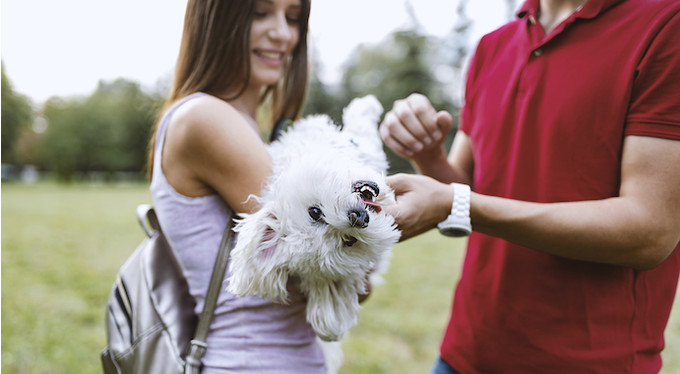 Choose a dog and live in harmony with it: advice from a zoopsychologist