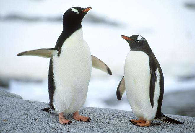 Фото №1 - 28 фактов о животных, которые поднимут настроение