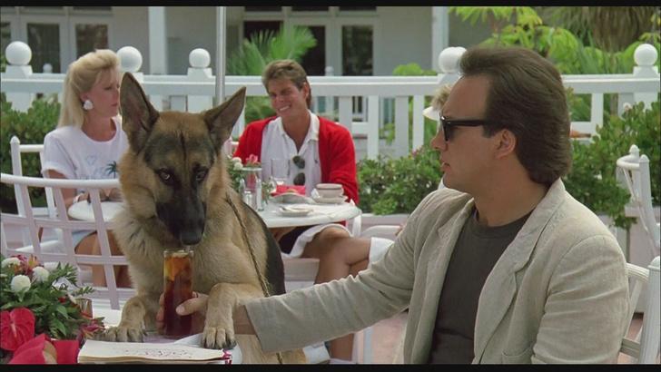 Фото №3 - Как сходить в кафе с собакой, чтобы в твоем счете не было разбитой посуды и покусанных посетителей