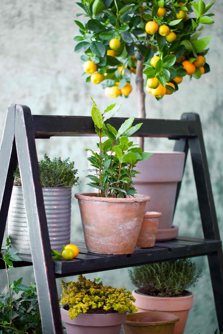Фото №6 - Календарь садовода: что и когда сажать дома и на даче