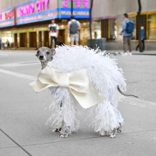 Фото №2 - Только от жизни собачьей: москвичи украсили своего питомца монограммой Louis Vuitton