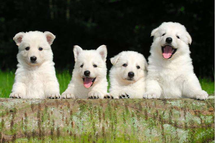 Фото №1 - Способность понимать людей у собак заложена в генах