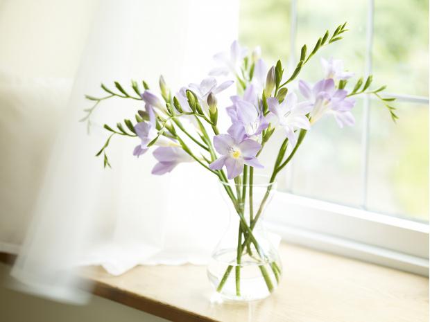 Фото №8 - Узнай, какой ты цветочек по дате рождения