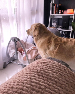 Фото №3 - Огромный пес опекает младенца с рождения: 20 милейших фото