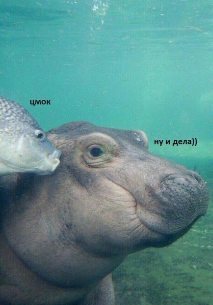 Фото №6 - 10 интернет-мемов, которые популярны только в России