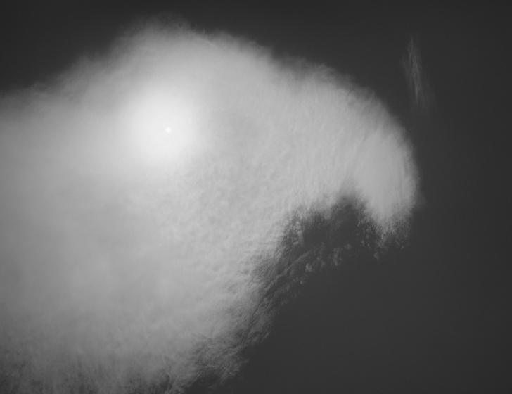 Фото №2 - Фотовыставка «Взгляд грифона» в Санкт-Петербурге