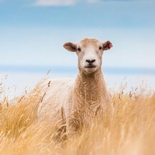 Фото №6 - Тест: Выбери животное, и мы скажем, с каким парнем ты будешь счастлива