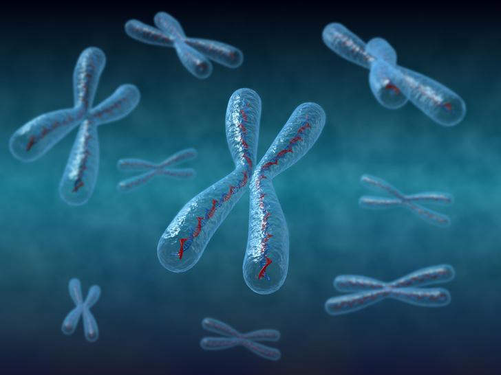 Фото №1 - Ученые впервые «взвесили» хромосому человека