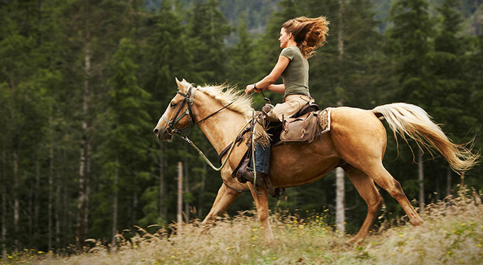 Хорошее отношение к лошадям