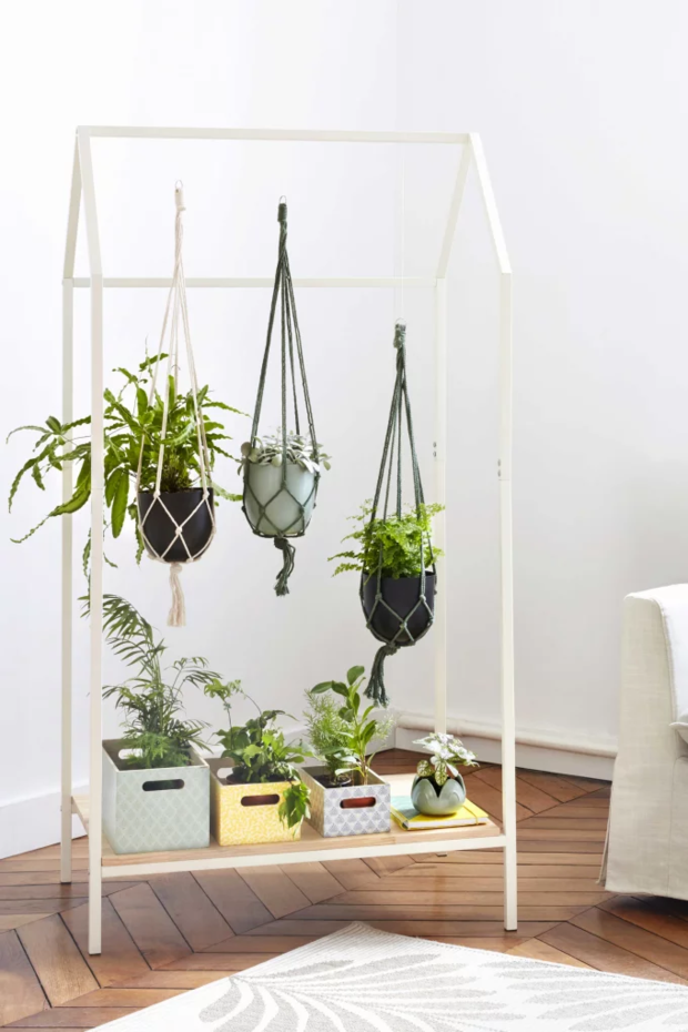 Фото №7 - Растения в интерьере: 7 идей для домашнего сада