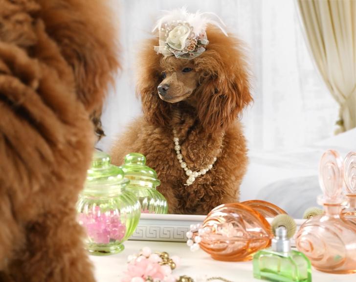 Фото №10 - Как мы все будем встречать Новый год 2021: показывают собачки