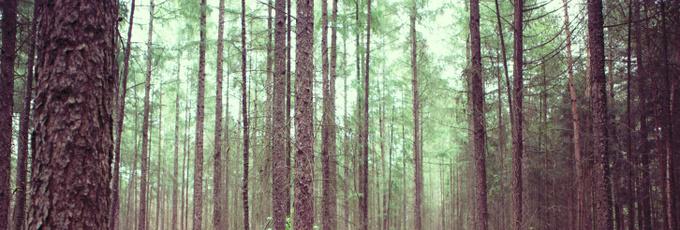 Амнезия: как и почему люди теряют память?