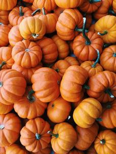 Фото №2 - Тест: Выбери тыкву, и мы опишем твою осень тремя эмодзи