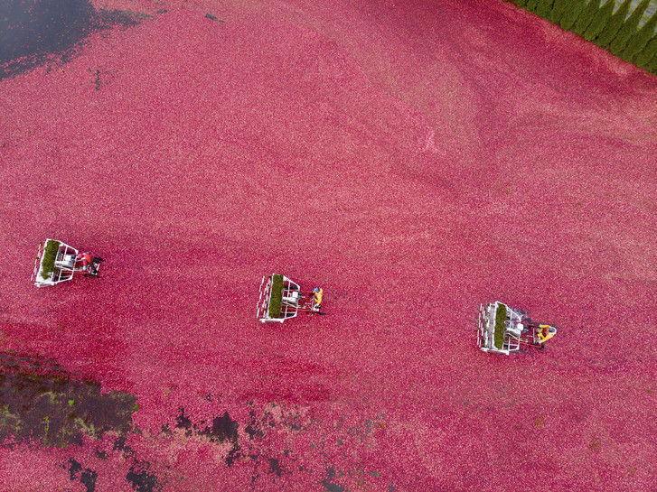 Фото №1 - Какая ягода не тонет в воде?