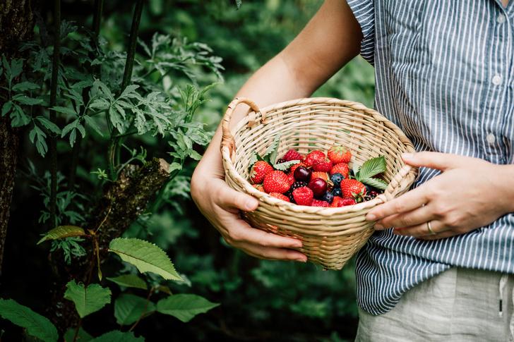 какие фрукты есть летом
